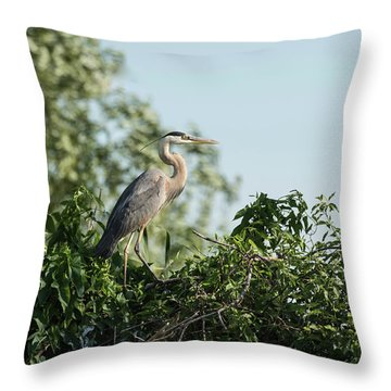 Throw Pillow featuring the photograph Great Blue Heron  2015-18 by Thomas Young