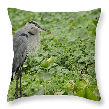 Great Blue Heron And Water Lilies Throw Pillow
