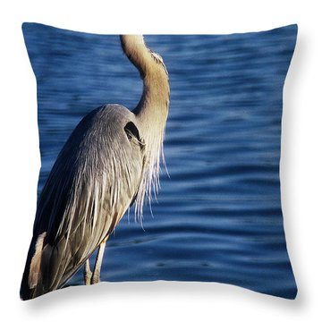 Great Blue Heron At Put-in-bay Throw Pillow