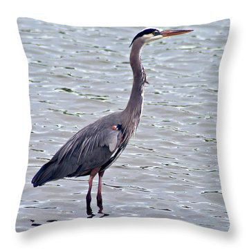 Throw Pillow featuring the photograph Great Blue Heron by Bill Barber