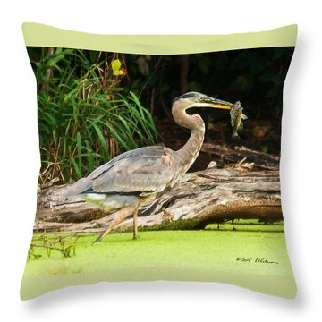 Great Blue Heron Catch Throw Pillow by Edward Peterson