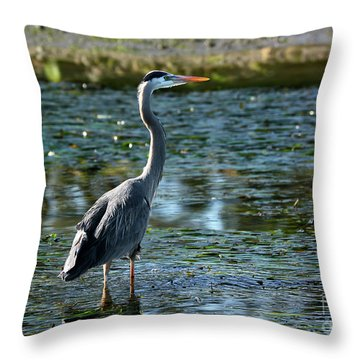 Great Blue Heron Catching The Light Throw Pillow