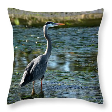 Throw Pillow featuring the photograph Great Blue Heron Catching The Light by Susan Wiedmann