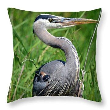 Great Blue Heron Close-up Throw Pillow