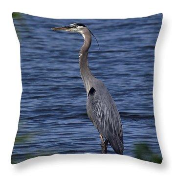 Great Blue Heron Dmsb0001 Throw Pillow
