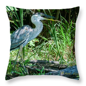 Great Blue Heron Fish Meal Throw Pillow by Edward Peterson