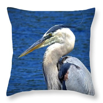 Great Blue Heron Glamor Shot Throw Pillow by Judy Wanamaker