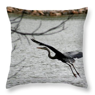 Great Blue Heron In Flight 6 Throw Pillow by David Dunham