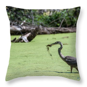 Great Blue Heron Main Meal Throw Pillow by Edward Peterson