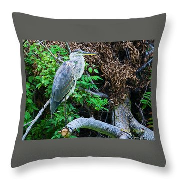 Great Blue Heron Perch Throw Pillow by Edward Peterson