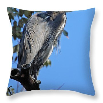 Great Blue Heron Perched Throw Pillow by DigiArt Diaries by Vicky B Fuller
