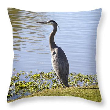 Throw Pillow featuring the photograph Great Blue Heron by Phyllis Denton