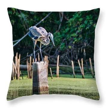 Great Blue Heron Posed Throw Pillow by Edward Peterson