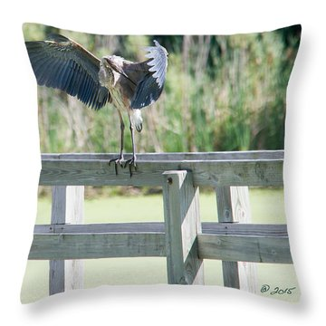 Great Blue Heron Preening Throw Pillow by Edward Peterson