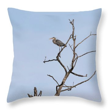 Throw Pillow featuring the photograph Great Blue Heron Presentation 2017-1  by Thomas Young