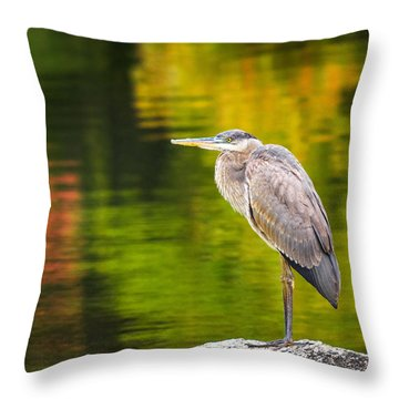 Great Blue Heron Throw Pillow by Robert Clifford