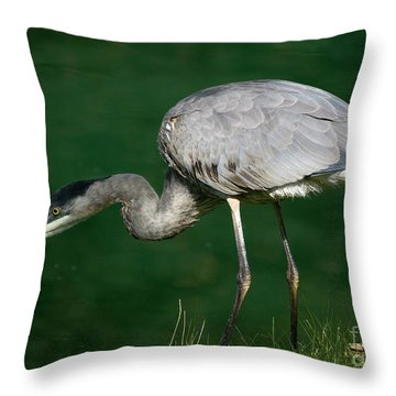 Great Blue Heron Series Throw Pillow