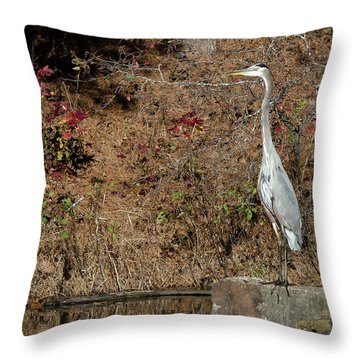 Great Blue Heron Standing Tall Throw Pillow
