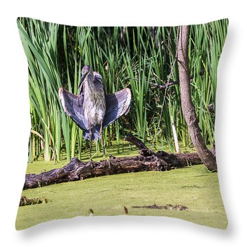 Great Blue Heron Sunning Throw Pillow by Edward Peterson