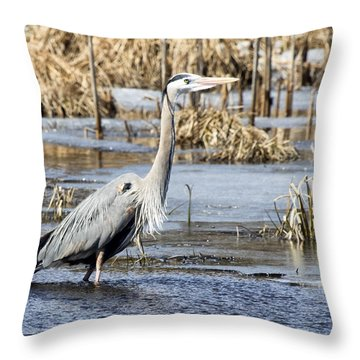 Great Blue Heron Wading  Throw Pillow