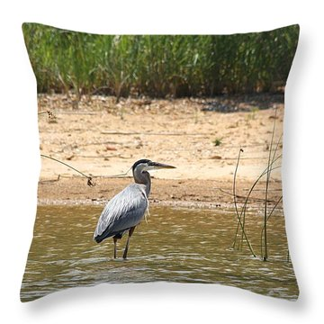 Throw Pillow featuring the photograph Great Blue Heron Wading by Sheila Brown