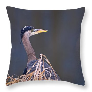 Throw Pillow featuring the photograph Great Blue Heron Waiting by Sharon Talson