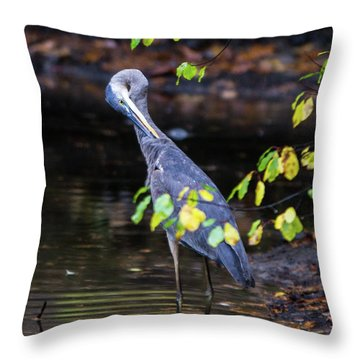 Great Blue Heron With An Itch Throw Pillow