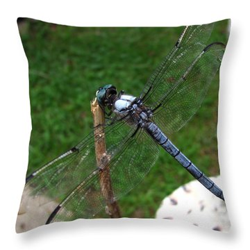 Great Blue Skimmer Throw Pillow