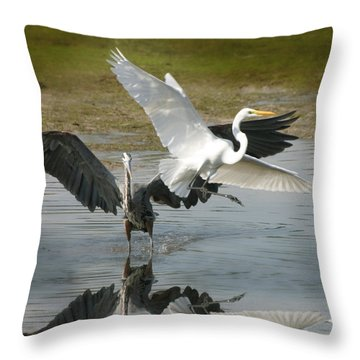 Great Blue Vs. Great White Egret Throw Pillow