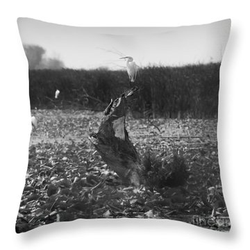 Throw Pillow featuring the photograph Great Egret At Horicon Marsh  by Ricky L Jones