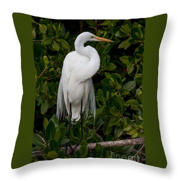 Throw Pillow featuring the photograph Great Egret by Chris Scroggins