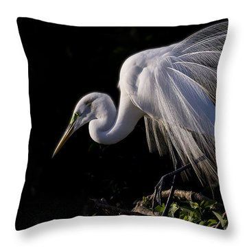 Throw Pillow featuring the photograph Great Egret Display by Don Durfee