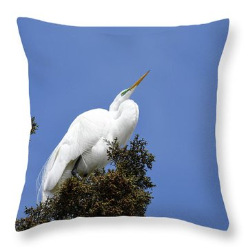 Throw Pillow featuring the photograph Great Egret by Gary Wightman