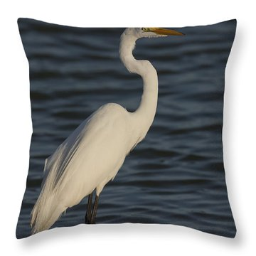 Great Egret In The Last Light Of The Day Throw Pillow