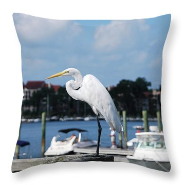 Throw Pillow featuring the photograph Great Egret by Margaret Palmer