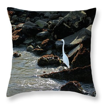 Great Egret On Sunny Seaside Rocks Throw Pillow