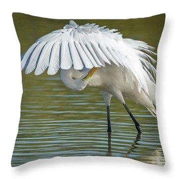 Great Egret Preening 8821-102317-2 Throw Pillow