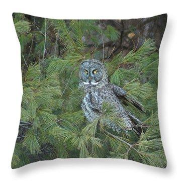 Great Gray Owl In Pine Tree Throw Pillow by John Burk