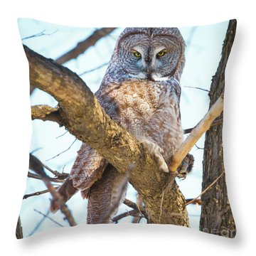 Great Gray Owl Throw Pillow by Ricky L Jones