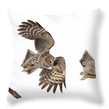Throw Pillow featuring the photograph Great Grey Owl Hunting by Mircea Costina Photography