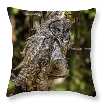 Great Grey Owl In Windy Spring Throw Pillow