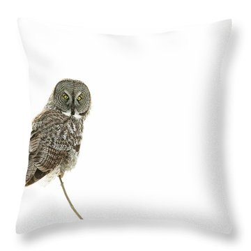 Throw Pillow featuring the photograph Great Grey Owl On White by Mircea Costina Photography