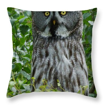 Great Grey Owl - Surprised Throw Pillow