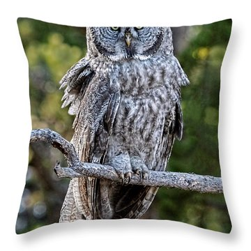 Great Grey Owl Yellowstone Throw Pillow