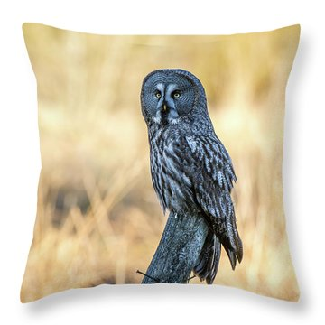 Great Grey Perching Throw Pillow by Torbjorn Swenelius