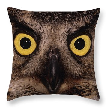 Great Horned Owl Face Throw Pillow by Tony Beck
