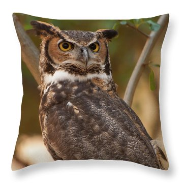 Great Horned Owl In A Tree 3 Throw Pillow by Chris Flees