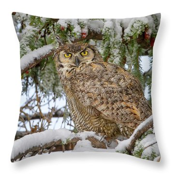 Great Horned Owl In Snow Throw Pillow by Jack Bell