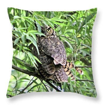 Great Horned Owl Looking At You Throw Pillow