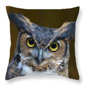 Great Horned Owl Portrait Throw Pillow by Kathy Baccari